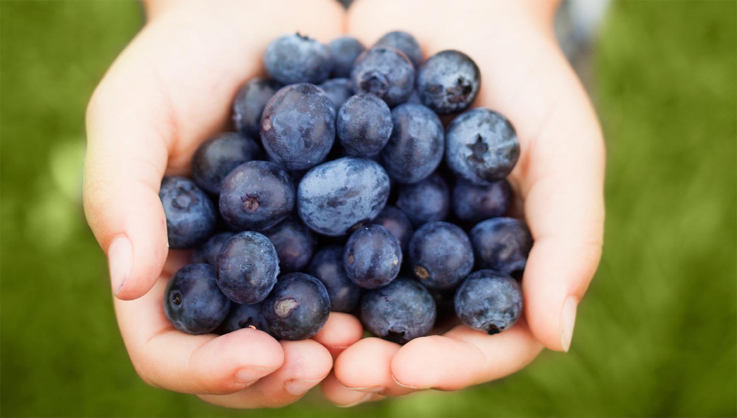 handful-of-blueberries-1502-1